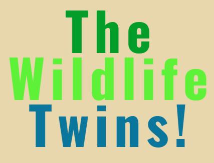 The wildlife twins